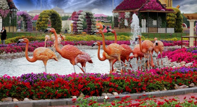 Plancong Dubai Miracle Garden Ticket Prices Timings For Visit