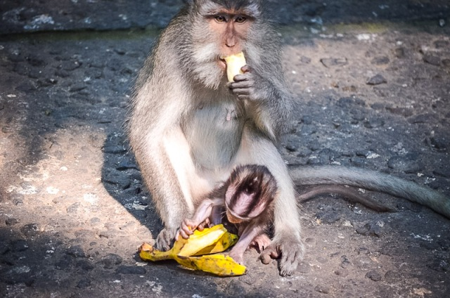 Sacred Monkey Forest Sanctuary Entrance Fee